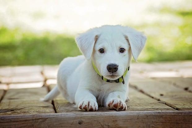 dogs-reduce-stress
